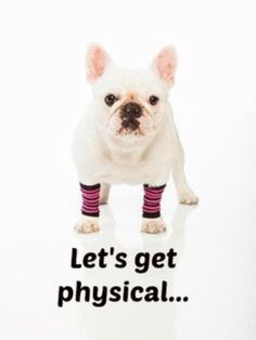 """Let's Get Physical!""... ""but later, like after a nap, and maybe some chips and Netflix""... ""k?"" funny French Bulldog"