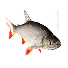 Watercolor Illustration. Flora And Fauna, Watercolor Illustration, Digital Art, Fish, Pisces, Watercolour Illustration