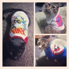 i want my cats to wear shirts like this