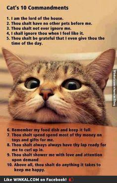 Cats commandments