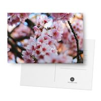 Postal Cherry Blossom