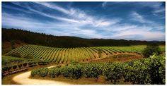 El Miño tiene aroma de Albariño, Loureiro y Caíño Blanco http://blgs.co/e775rm
