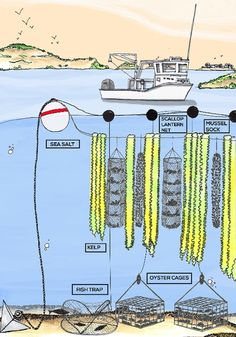 """Bren Smith's project GreenWave is a """"3D ocean farm,"""" which provides food and fuel, restores oceans and stops climate change. Seaweed, algae or kelp"""