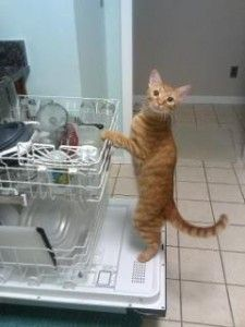 One of our members trained their kitty to do the dishes! Be sure to vote in the Pet Contest on our blog and Facebook by 4/25!