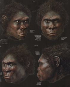 Homo habilis - reconstruction by Kennis & Kennis Prehistoric Man, Prehistoric Creatures, Homo Habilis, Dna Art, Becoming Human, Early Humans, Human Evolution, Photographs Of People, African History