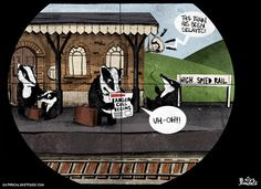 27 August 2013 - Ben Jennings on the badger cull and HS2 rows.