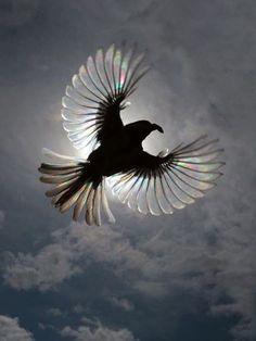 #BIRD#