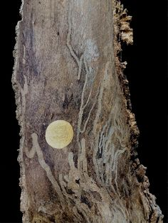 Insect Poetry, by Nancy Mims. Found bark, gold paint. (asemic writing)