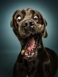 Жизнерадостные собаки | Life on Photo