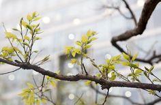 봄이 피어나다
