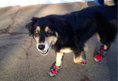 """""""Our dog Che!! This was on a sub zero morning in Flagstaff last winter and he got to wear his fancy vibram sole shoes!""""   #ElPortalSedona #SedonaGetaway #petphotocontest"""