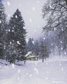 Let It Snow December Comment Winter 1 Instagram Christmas Trees Tress Xmas