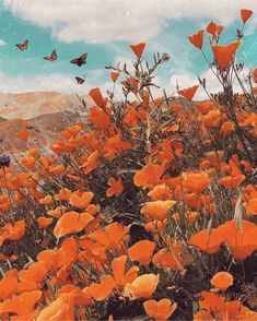 Orange Aesthetic Discover Superbloom a map of dreams Orange Aesthetic, Rainbow Aesthetic, Aesthetic Colors, Flower Aesthetic, Aesthetic Collage, Aesthetic Pictures, Aesthetic Vintage, Aesthetic Drawing, Aesthetic Pastel