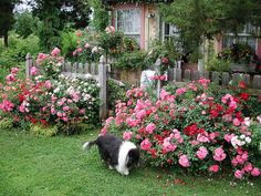 cottage garden design - Google Search