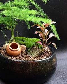 sempreverde di origine Indoor Plants, Mini Garden, Plants, Zen Garden, Garden Lovers, Flowers, Indoor Gardens, Moss Garden, Garden