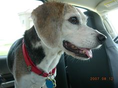 Parents Name: Jaylin Pets Name: Bailey Pet Species: Dog Pets Favorite thing to do: Living life to the fullest Eulogy: Come, and let me hold you as I always have, just one last time. Come lay your h...