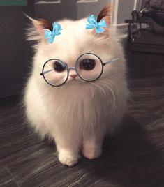 This snapchat filter on my cat http://ift.tt/2uWKpbk