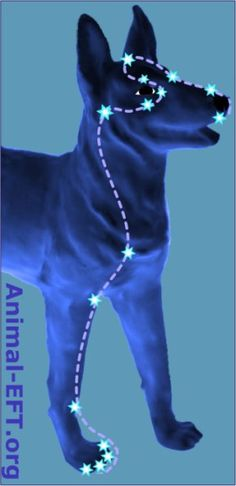 "EFT On A Dog EFT Tapping Points for a dog  FIREWORKS , WATER, etc. www.TappingNavigator.com  ""Tapping Into Your Best Life!"""