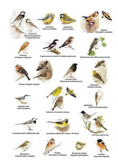 Protected birds and nature in the province of Santa Fe. All Birds, Love Birds, Beautiful Birds, Bird Identification, Animal Posters, Bird Pictures, Vintage Birds, Bird Prints, Bird Watching