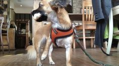 Dog Friendly UK - Hotel Reviews, Dog Pubs, Dog Travel | Blog