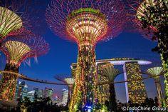 Singapur – Supertree Korusu'nda fütüristik bir bahçe oluşturan 12 dev ağaca benzer yapı var. 128 metre uzunlukta ve 22 metre yükseklikte olan yürüyüş yolu, Marina Bay bölgesinden kuşbakışı bir görüş sağlıyor. Yapıların içinde gerçek ağaçlarda bulunuyor. Gerçek ağaçlar sayesinde çelik ve cam yığını gökdelenler arasında nefes alacak alanlar yaratılmış.