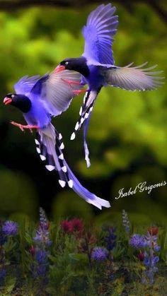 26 Ideas Colorful Bird Flying For 2019 Cute Birds, Pretty Birds, Beautiful Birds, Animals Beautiful, Exotic Birds, Colorful Birds, Kinds Of Birds, Birds Of Prey, Fauna