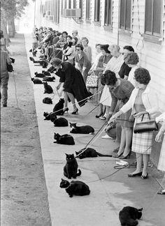 cat casting in holywood / такие миленькие котики и все эти 50-е (1961 на самом деле), что просто авввв