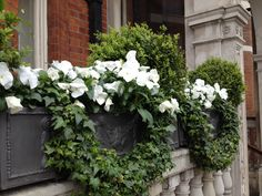 Houses With Window Sill Boxes - Yahoo Image Search Results