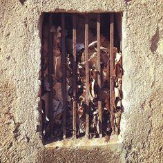 Cárcel de hojas / Leaves prison - @berto_romero