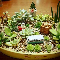 多肉植物だいすき。/クリスマス/セリア/植物/ガーデニング/雑貨…などのインテリア実例 - 2014-12-15 00:22:31 | RoomClip(ルームクリップ)