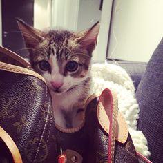 Si me escondo en su bolso, podré irme con ella!