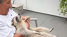 Maleni rakun dobio je udarac golf palicom i ima oštećenje mozga.