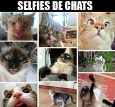 Selfie de chats
