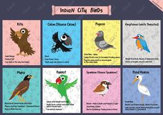 We grew in more greener and bio diverse cities than our children. Today crows and pigeons are just about the only two city birds that we can show our kids in our cities. So we decided to make a poster to show childrens some other not so common city birds. #Indian city #Birds #Crow #Pigeon #Sparrow #Parrot #Indian birds #Urban Birds #Ekdali #Education #Kids #Posters #Charts #Heron