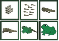 A Child's Place: Frog Sequence Cards