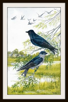 Bird Book Print 1932 Frameable Wall Art Purple Martin Swallow Blue Black Green Nature Meadow Shabby Cottage Chic Rustic Cabin Lodge