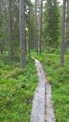 Early morning walk in July. Geocaching in Jurva, Kurikka (Finland) - kaffitreili / coffee trail.