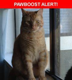Please spread the word! Pip was last seen in New Port Richey, FL 34653.    Nearest Address: Near Hollyridge Dr & Magnolia Valley Dr