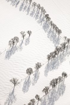 #snow #white #shadow #trees #winter