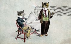 antique cat postcard