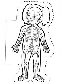 Large Human Body Contours for Display - SparkleBo Kindergarten, Montessori Classroom, My Themes, Education Quotes For Teachers, Body Systems, Body Contouring, Science And Nature, Educational Technology, Pre School