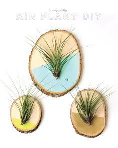 Air Plants on Wood Slices DIY