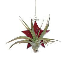 Red Stained Glass Air Plant Holder - £20.00
