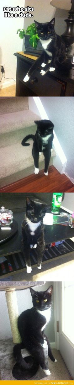 The cat who sits like a human.   ...........click here to find out more     http://googydog.com