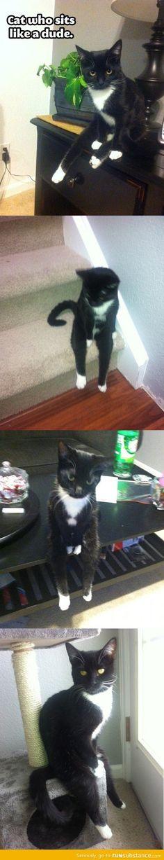 The cat who sits like a human.