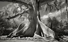 Portraits of Time, Beth Moon