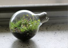 I love that this is recycling to make a low-maintenance terrarium!