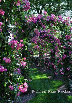 Rambler roses and dancing water: Formal gardens at Longwood Gardens | Digging