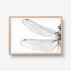 Dragonfly Art, Behance, Art Prints, Gallery, Check, Projects, Log Projects, Roof Rack, Art Print