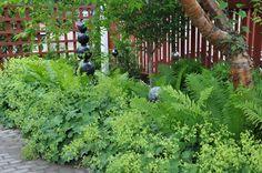 Daggkåpa prydnadsgräs - Sök på Google